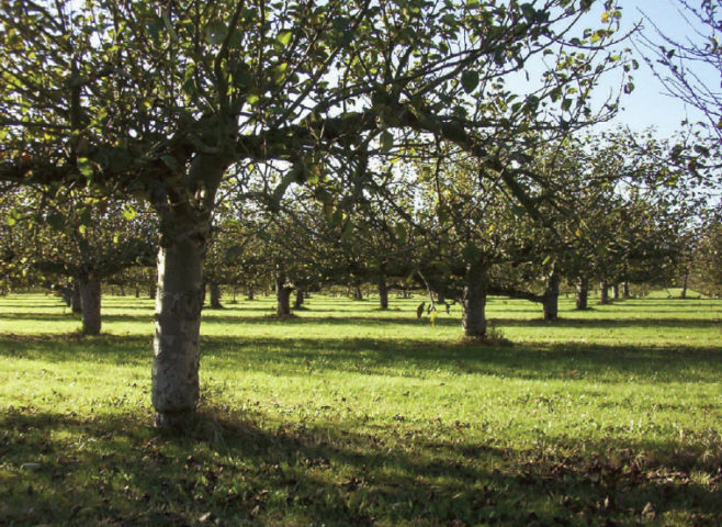 orchard at March