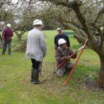 Restorative Pruning Workshop