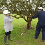 Restorative Pruning Workshop - taking a bough