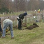 Volunteers digging out the busway hedging strip