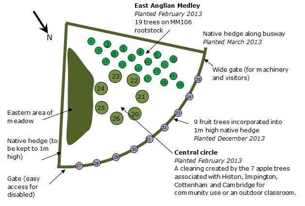 Orchard plan for 2013
