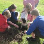170309 planting 5